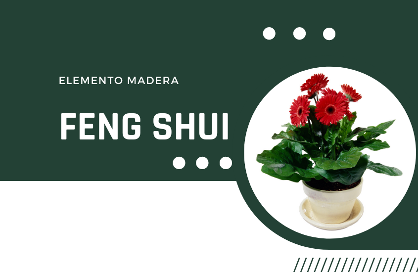 Feng Shui: La Madera como Ajuste