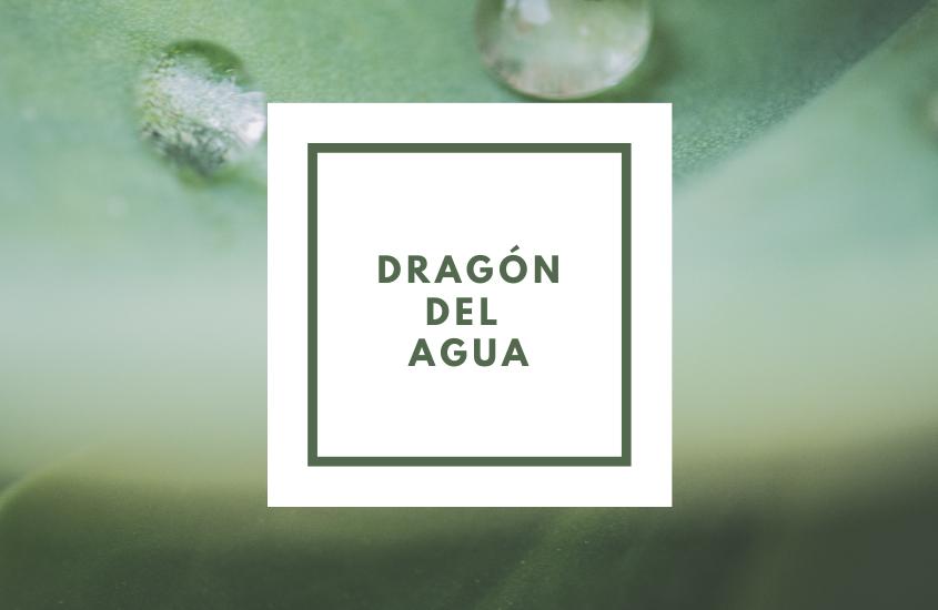 Feng Shui: ¿Qué es Dragón del Agua?