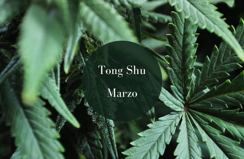Tong Shu Febrero, Marzo, Abril 2015